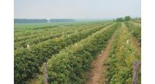 全国最大树莓基地电话