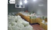 果蔬保鲜冷库安装