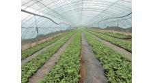 蓝莓苗供应商