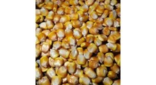 黑龙江玉米收购公司