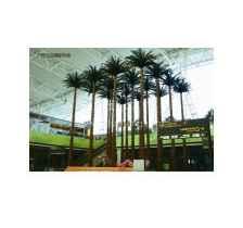 上海标本树销售