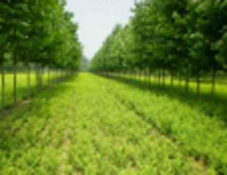 河北工程绿化苗木