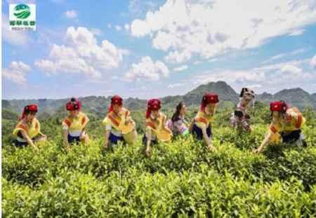 有机红茶绿茶供应商
